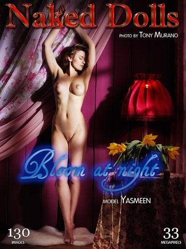 "Yasmeen ""Bloom at Night"""