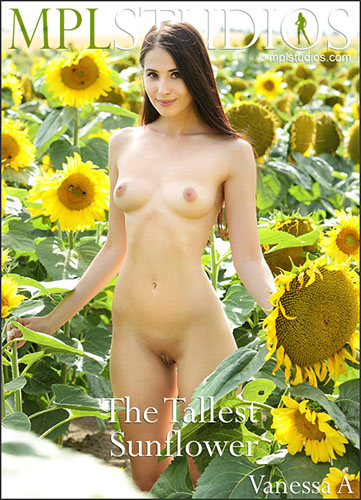 "Vanessa A ""The Tallest Sunflower"""