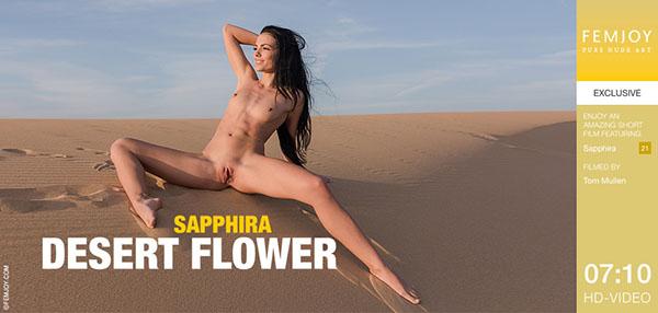 "Sapphira ""Desert Flower"""