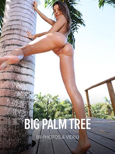"Maria ""Big Palm Tree"""