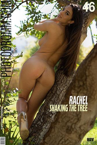 "Rachel ""Shaking The Tree"""