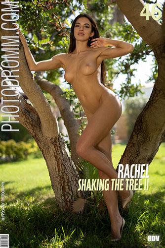 """Rachel """"Shaking The Tree II"""""""